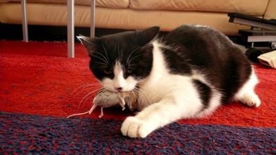 Cat And Mouse-1
